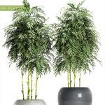 تحميل موديلات  616 Plant نبات