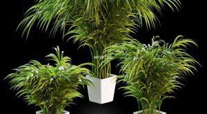 تحميل موديلات  618 Plant نبات