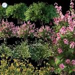 تحميل موديلات  619 Plant نبات