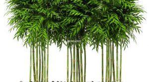 تحميل موديلات  623 Plant نبات