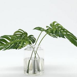 تحميل موديلات  34 Plant نبات
