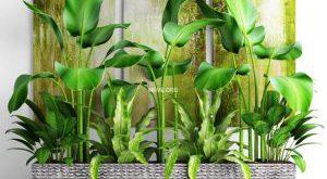 تحميل موديلات  624 Plant نبات