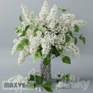 تحميل موديلات  625 Plant نبات