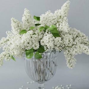 تحميل موديلات  626 Plant نبات