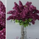 تحميل موديلات  627 Plant نبات