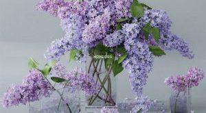 تحميل موديلات  628 Plant نبات
