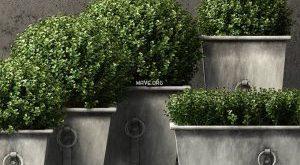 تحميل موديلات  629 Plant نبات