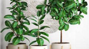 تحميل موديلات  633 Plant نبات