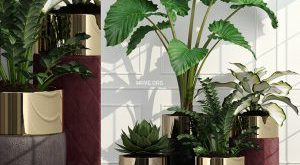 تحميل موديلات  644 Plant نبات