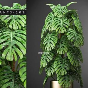 تحميل موديلات  647 Plant نبات