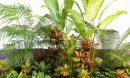 تحميل موديلات  648 Plant نبات