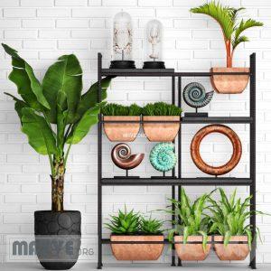 تحميل موديلات  649 Plant نبات