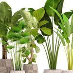 تحميل موديلات  653 Plant نبات