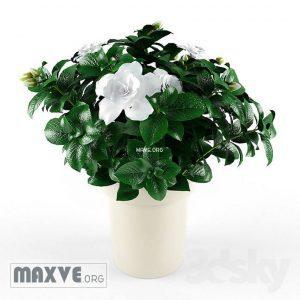 تحميل موديلات  37 Plant نبات