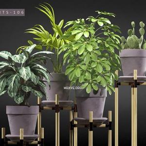 تحميل موديلات  655 Plant نبات