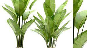 تحميل موديلات  656 Plant نبات