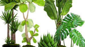 تحميل موديلات  657 Plant نبات