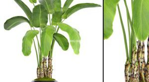 تحميل موديلات  659 Plant نبات