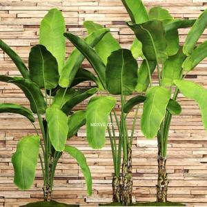 تحميل موديلات  660 Plant نبات