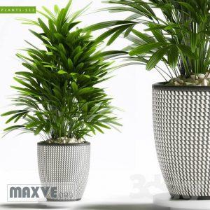 تحميل موديلات  662 Plant نبات