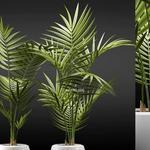 تحميل موديلات  664 Plant نبات