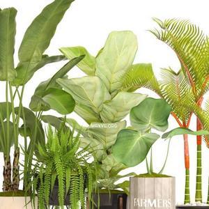 تحميل موديلات  665 Plant نبات