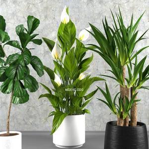 تحميل موديلات  666 Plant نبات