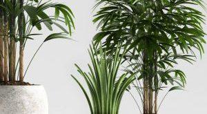 تحميل موديلات  668 Plant نبات