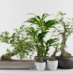 تحميل موديلات  672 Plant نبات
