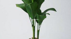 تحميل موديلات  45 Plant نبات