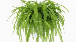 تحميل موديلات  50 Plant نبات
