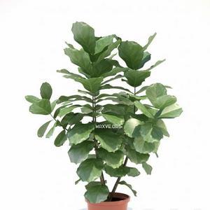 تحميل موديلات  51 Plant نبات