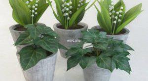 تحميل موديلات  104 Plant نبات
