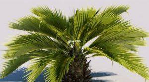 تحميل موديلات  22 Plant نبات