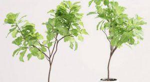 تحميل موديلات  110 Plant نبات