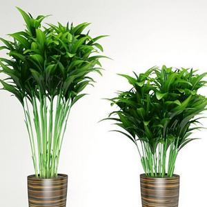 تحميل موديلات  114 Plant نبات