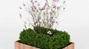 تحميل موديلات  115 Plant نبات