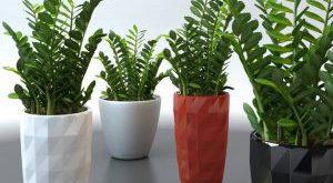 تحميل موديلات  123 Plant نبات