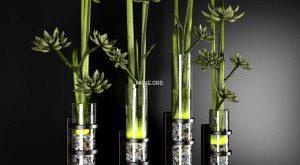 تحميل موديلات  137 Plant نبات