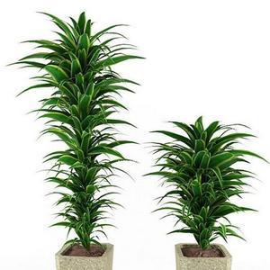 تحميل موديلات  138 Plant نبات