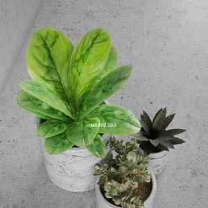 تحميل موديلات  145 Plant نبات