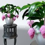 تحميل موديلات  146 Plant نبات