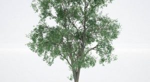 تحميل موديلات  150 Plant نبات