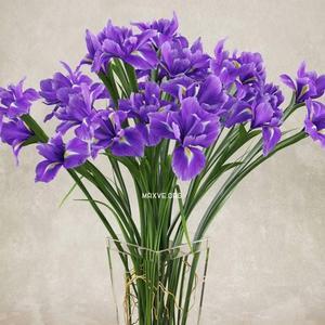 تحميل موديلات  157 Plant نبات