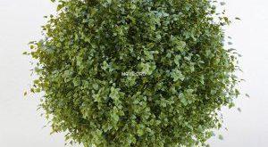 تحميل موديلات  163 Plant نبات