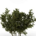 تحميل موديلات  170 Plant نبات