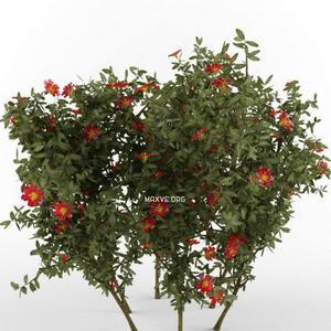 تحميل موديلات  171 Plant نبات