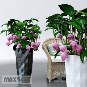 تحميل موديلات  176 Plant نبات