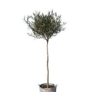 تحميل موديلات  193 Plant نبات