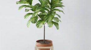 تحميل موديلات  195 Plant نبات